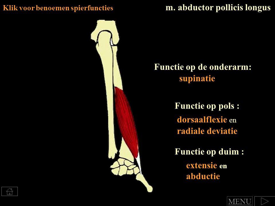 m. abductor pollicis longus