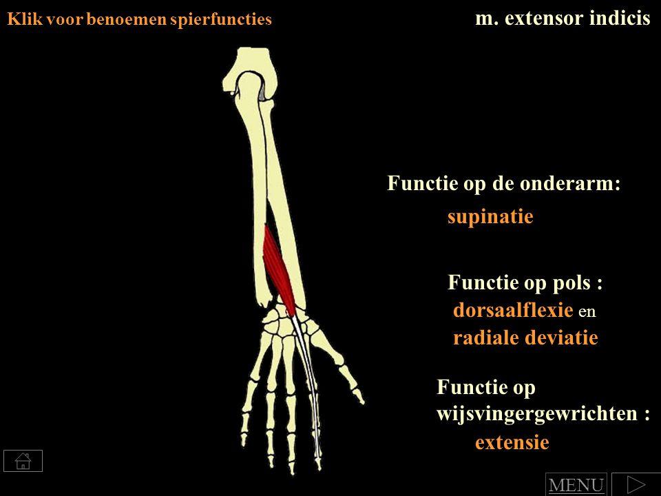 Functie op de onderarm: