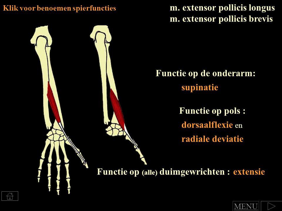 m. extensor pollicis longus m. extensor pollicis brevis