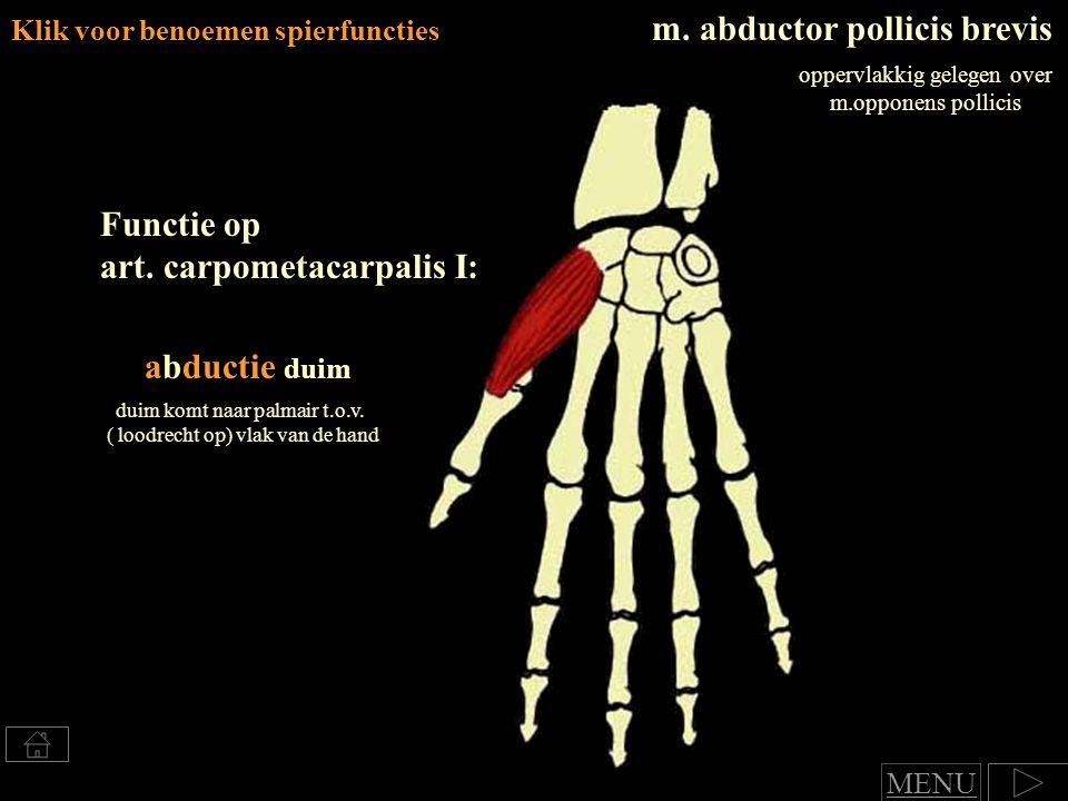 m. abductor pollicis brevis