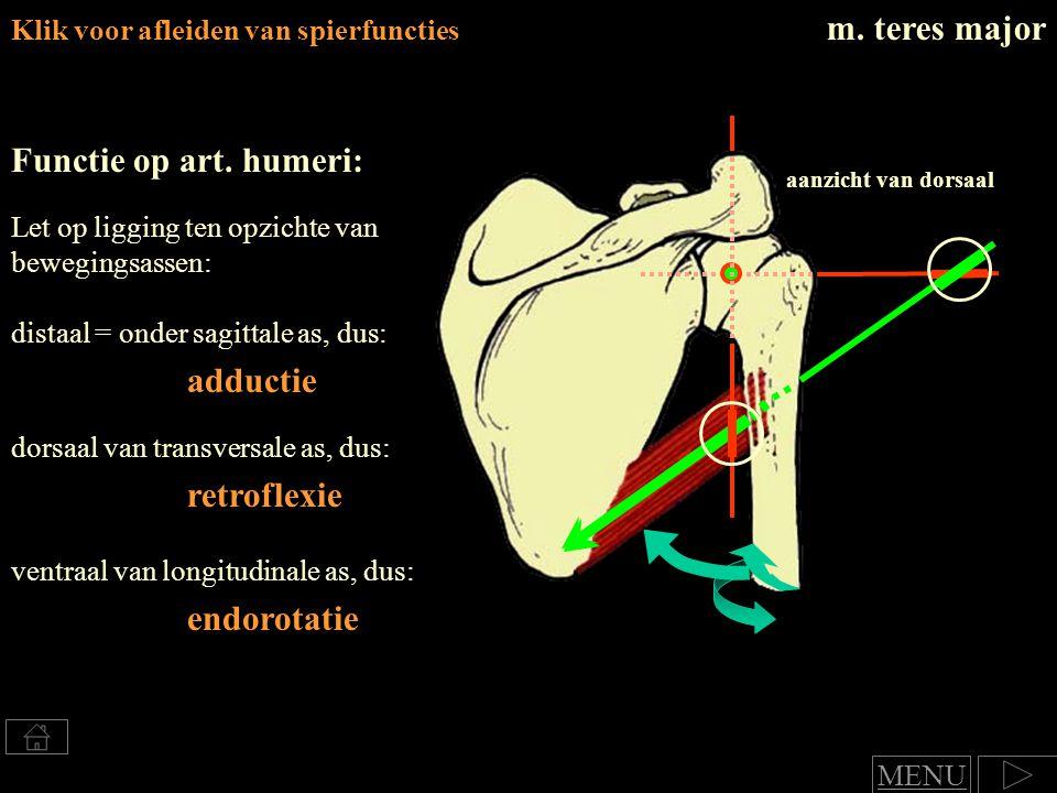 m. teres major Functie op art. humeri: adductie retroflexie