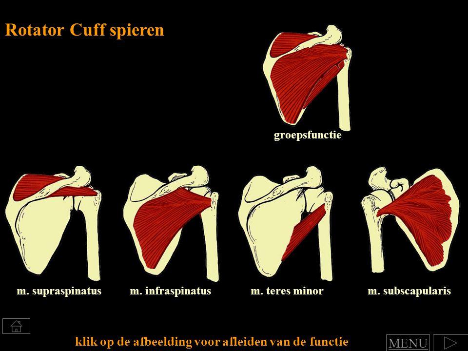 Rotator Cuff spieren groepsfunctie. m. supraspinatus. m. infraspinatus. m. teres minor. m. subscapularis.
