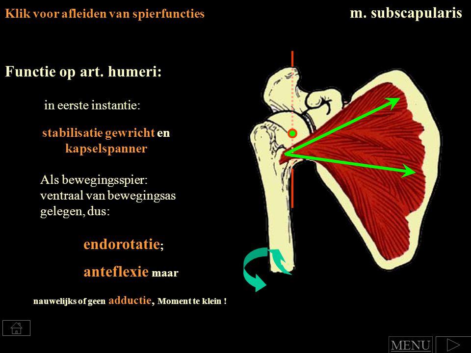 m. subscapularis Functie op art. humeri: endorotatie; anteflexie maar