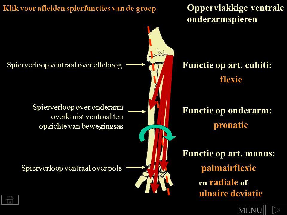 Oppervlakkige ventrale onderarmspieren
