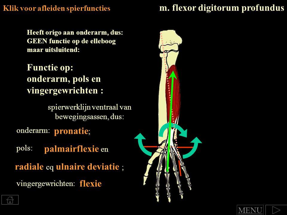spierwerklijn ventraal van bewegingsassen, dus: