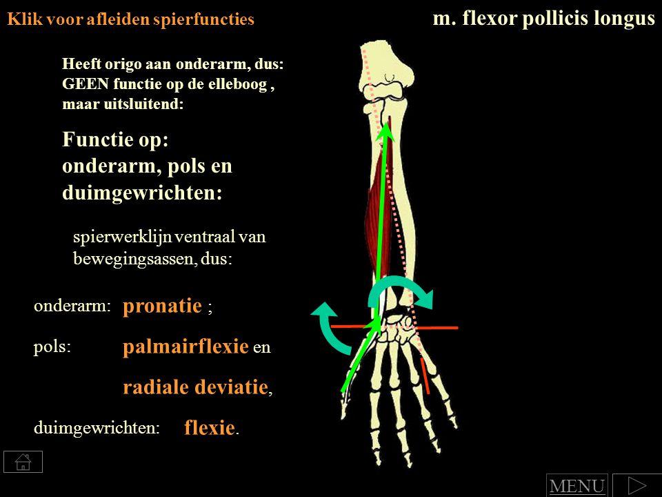 m. flexor pollicis longus