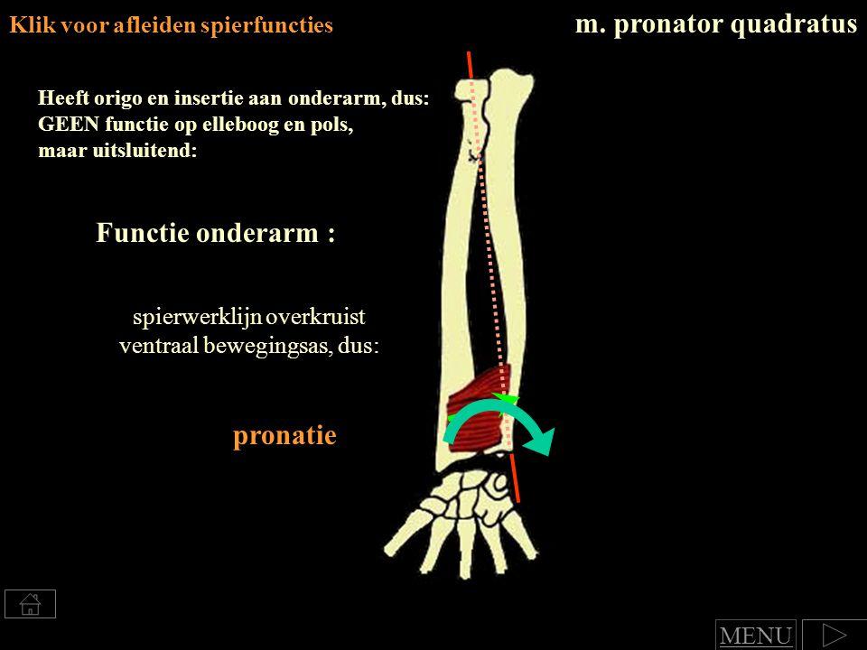 spierwerklijn overkruist ventraal bewegingsas, dus: