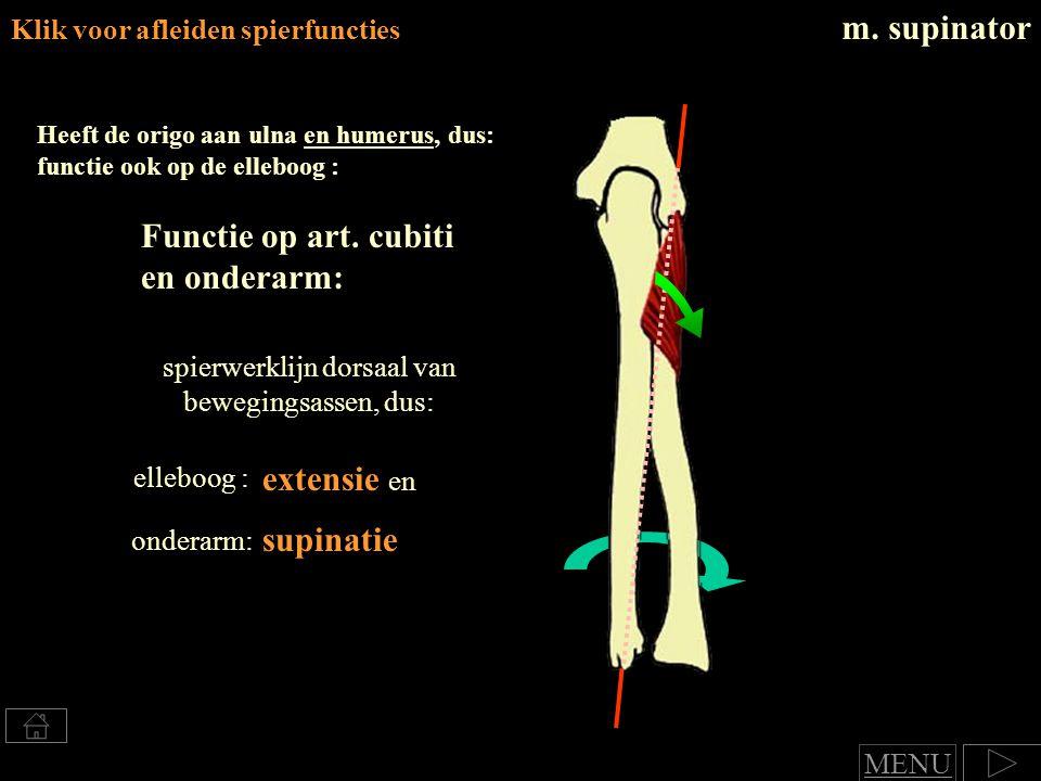 spierwerklijn dorsaal van bewegingsassen, dus: