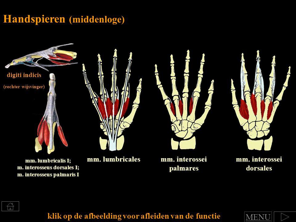 m. interosseus dorsales I; m. interosseus palmaris I