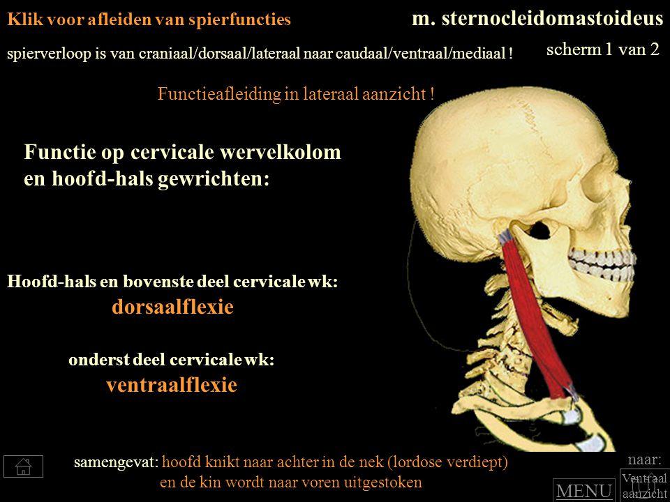 Hoofd-hals en bovenste deel cervicale wk: onderst deel cervicale wk: