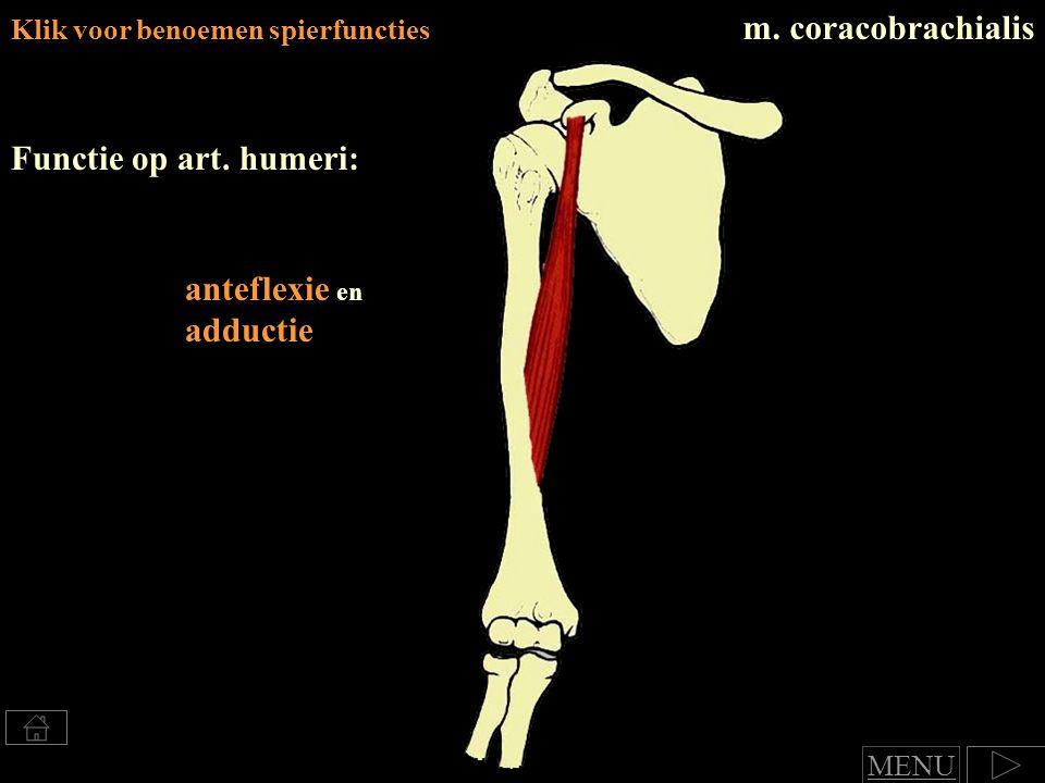 m. coracobrachialis Functie op art. humeri: anteflexie en adductie