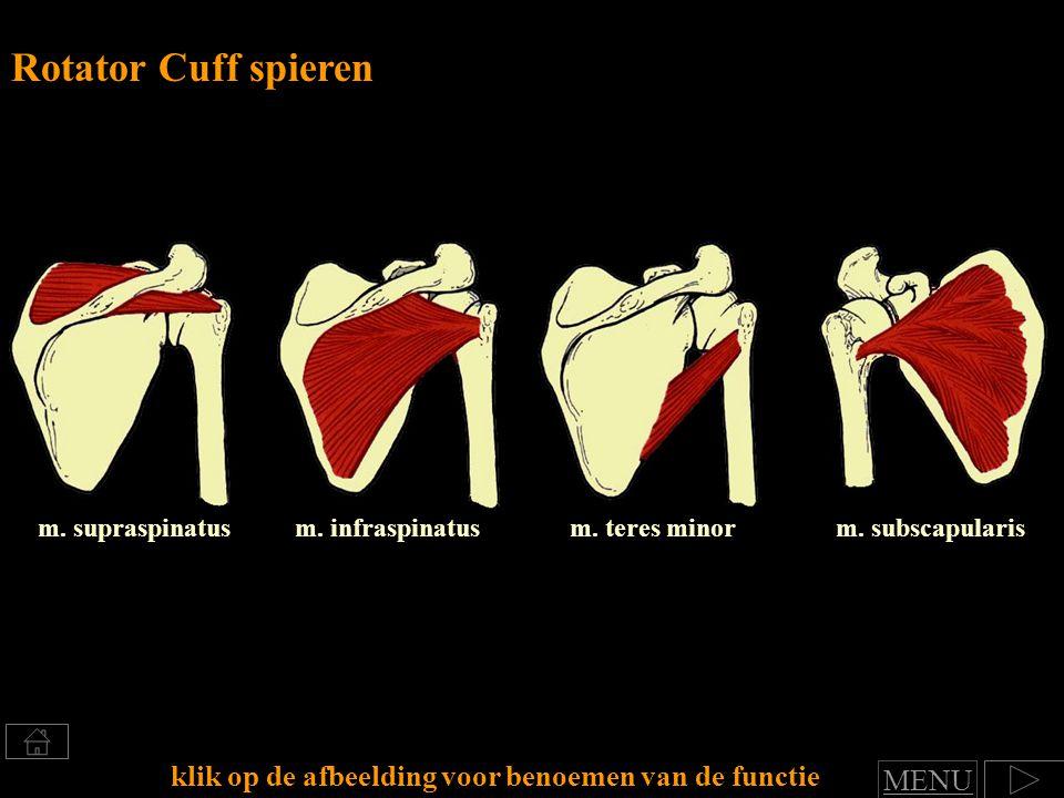 Rotator Cuff spieren m. supraspinatus. m. infraspinatus. m. teres minor. m. subscapularis. klik op de afbeelding voor benoemen van de functie.
