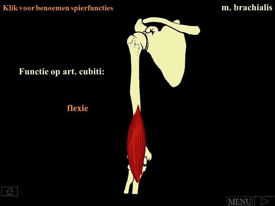m. brachialis Functie op art. cubiti: flexie