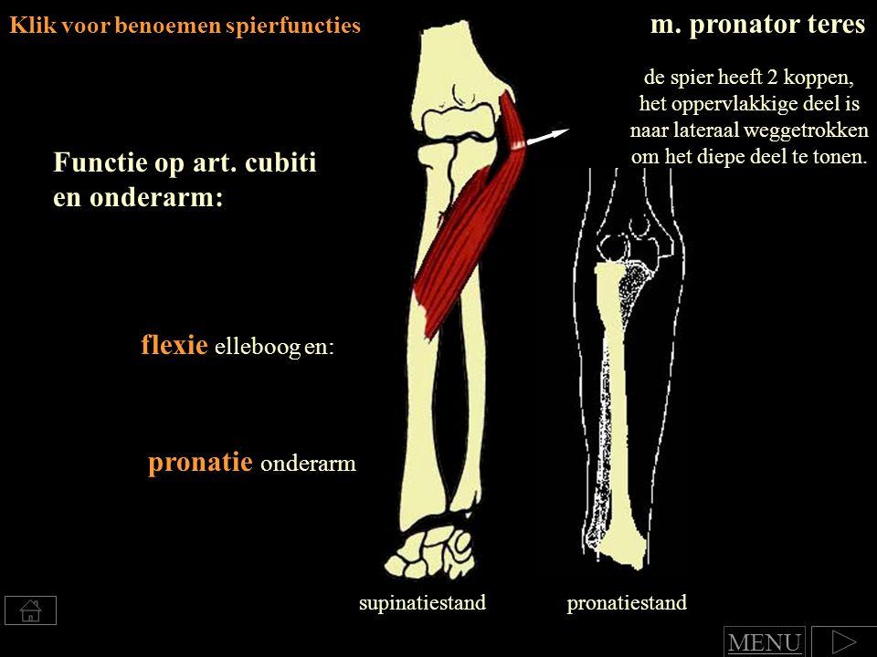 Functie op art. cubiti en onderarm:
