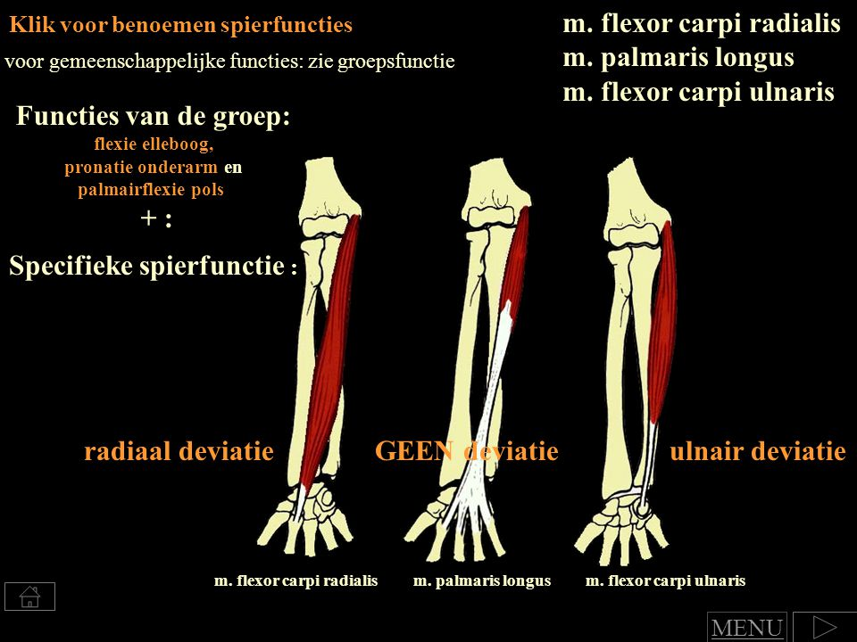 Specifieke spierfunctie : m. flexor carpi radialis