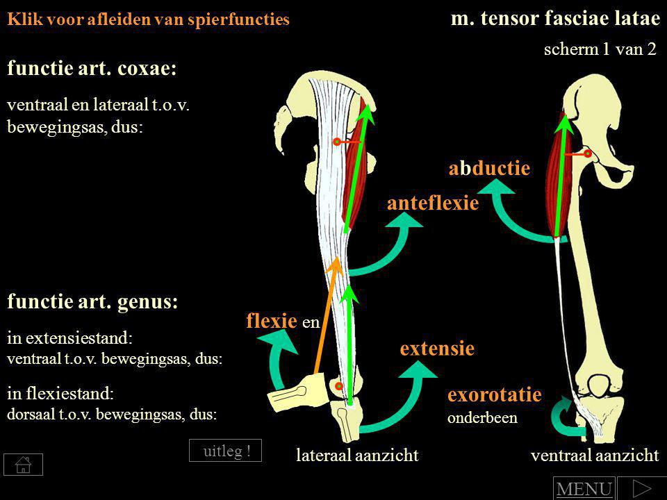 m. tensor fasciae latae functie art. coxae: abductie anteflexie