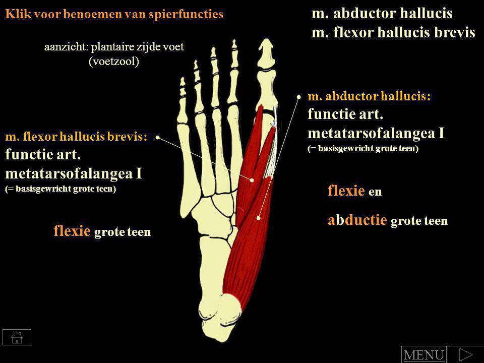 aanzicht: plantaire zijde voet (voetzool)