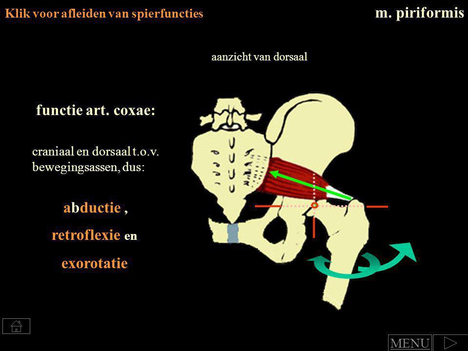 retroflexie en exorotatie
