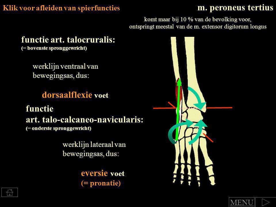 functie art. talocruralis: (= bovenste spronggewricht)