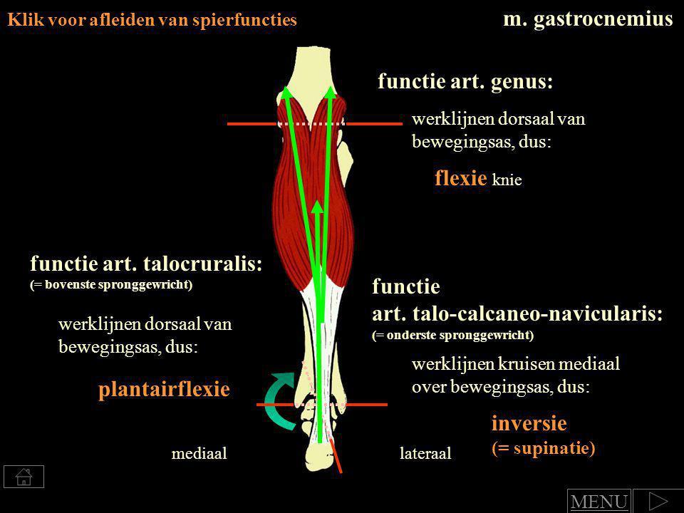 functie art. talocruralis: (= bovenste spronggewricht) functie