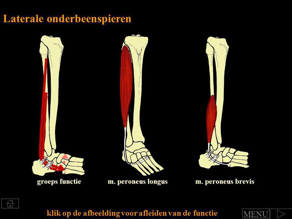 Laterale onderbeenspieren