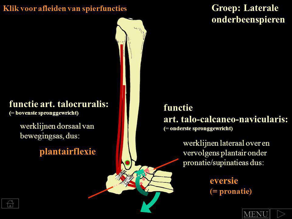 Groep: Laterale onderbeenspieren