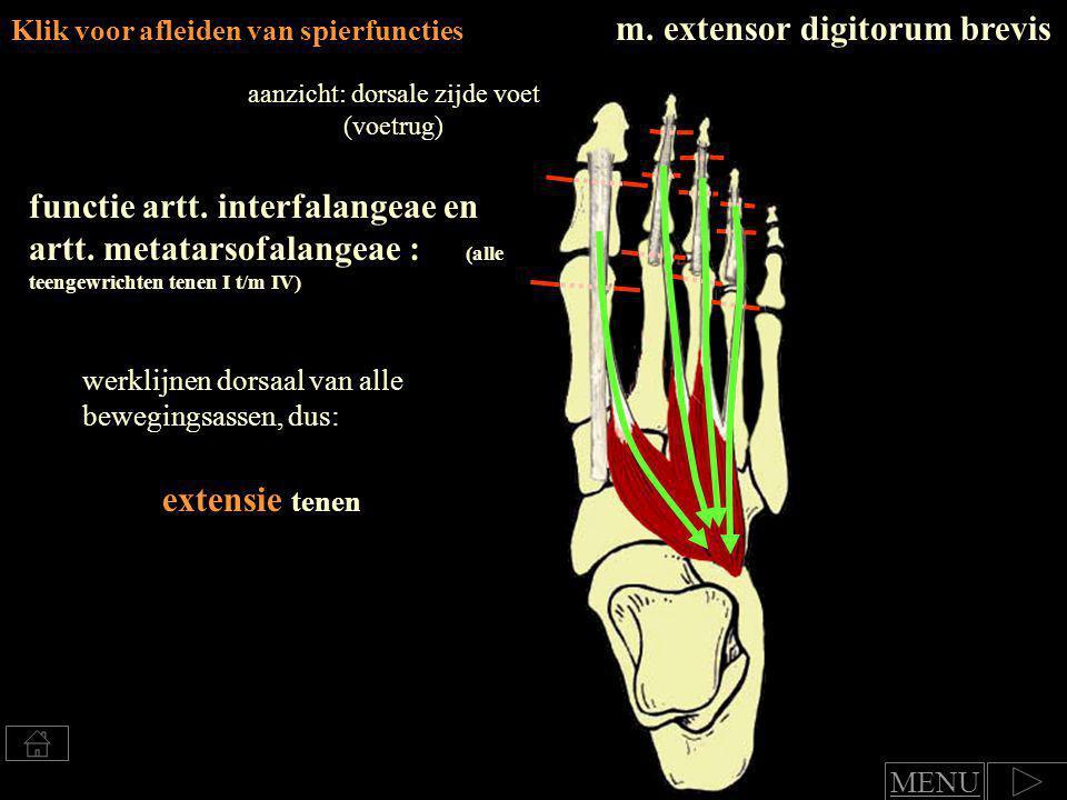aanzicht: dorsale zijde voet (voetrug)