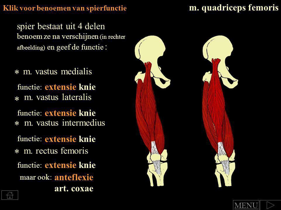 * * * * m. quadriceps femoris spier bestaat uit 4 delen
