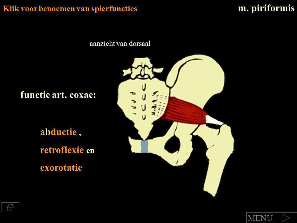 m. piriformis functie art. coxae: abductie , retroflexie en exorotatie