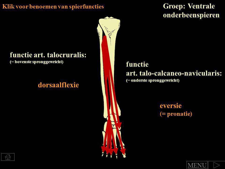 Groep: Ventrale onderbeenspieren