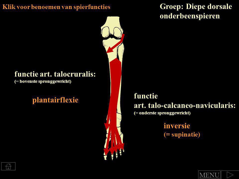 Groep: Diepe dorsale onderbeenspieren