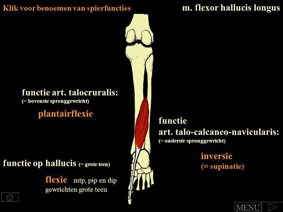 m. flexor hallucis longus