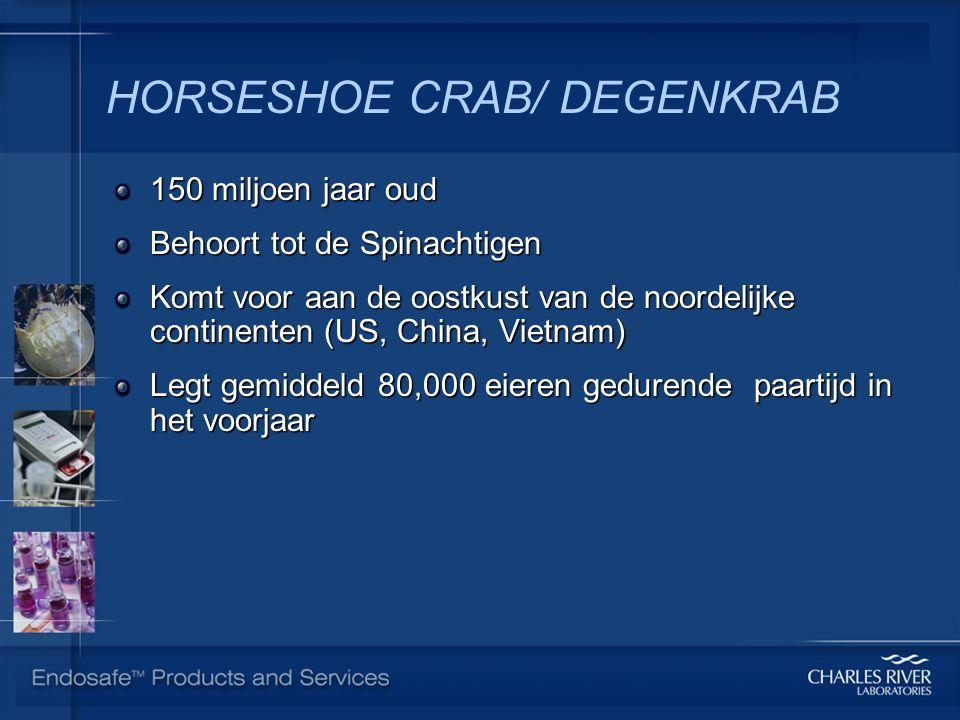 HORSESHOE CRAB/ DEGENKRAB