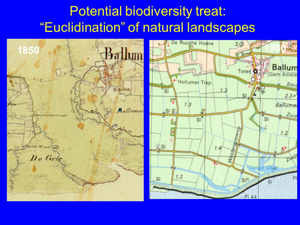 Potential biodiversity treat: Euclidination of natural landscapes