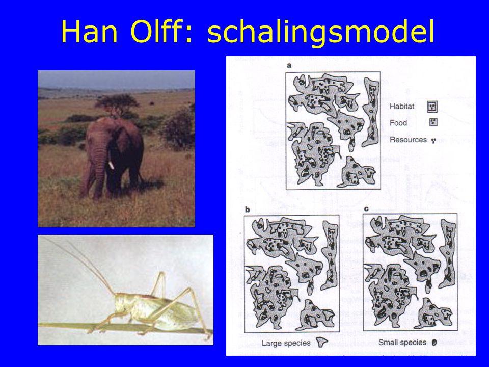 Han Olff: schalingsmodel