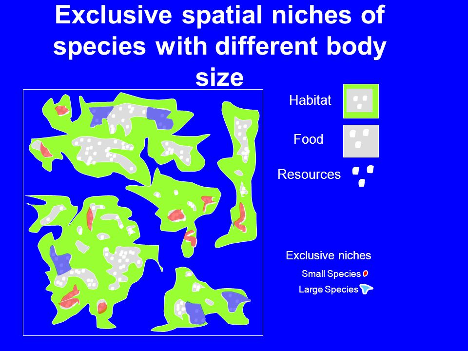 Exclusive spatial niches of species with different body size