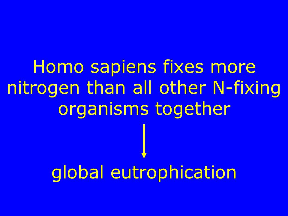 Homo sapiens fixes more nitrogen than all other N-fixing organisms together global eutrophication