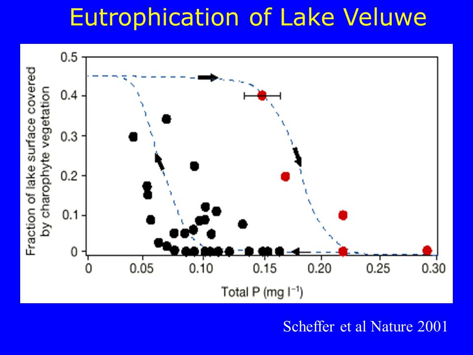 Eutrophication of Lake Veluwe