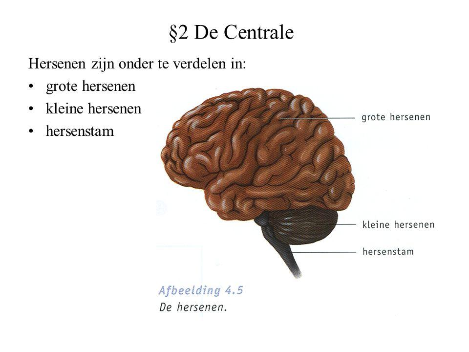 §2 De Centrale Hersenen zijn onder te verdelen in: grote hersenen