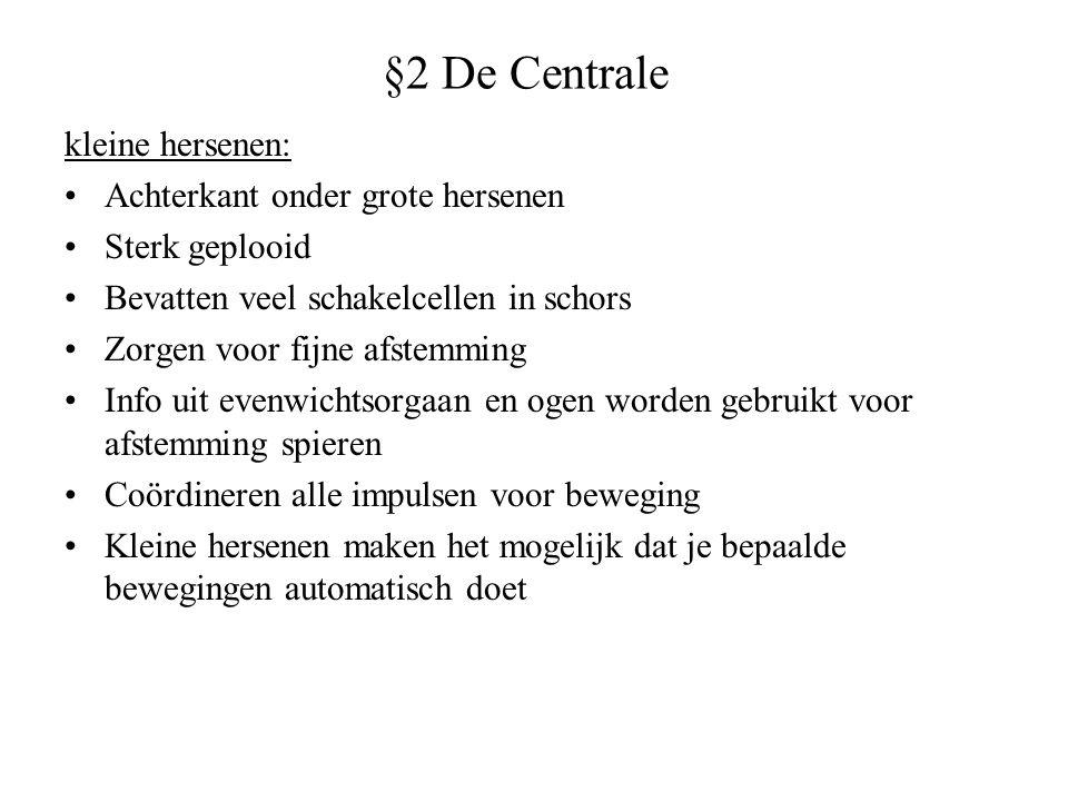 §2 De Centrale kleine hersenen: Achterkant onder grote hersenen