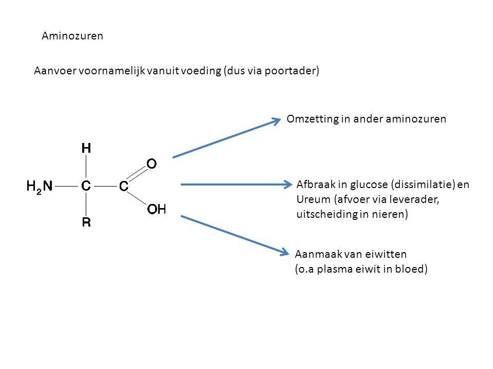 Aminozuren Aanvoer voornamelijk vanuit voeding (dus via poortader) Omzetting in ander aminozuren. Afbraak in glucose (dissimilatie) en.