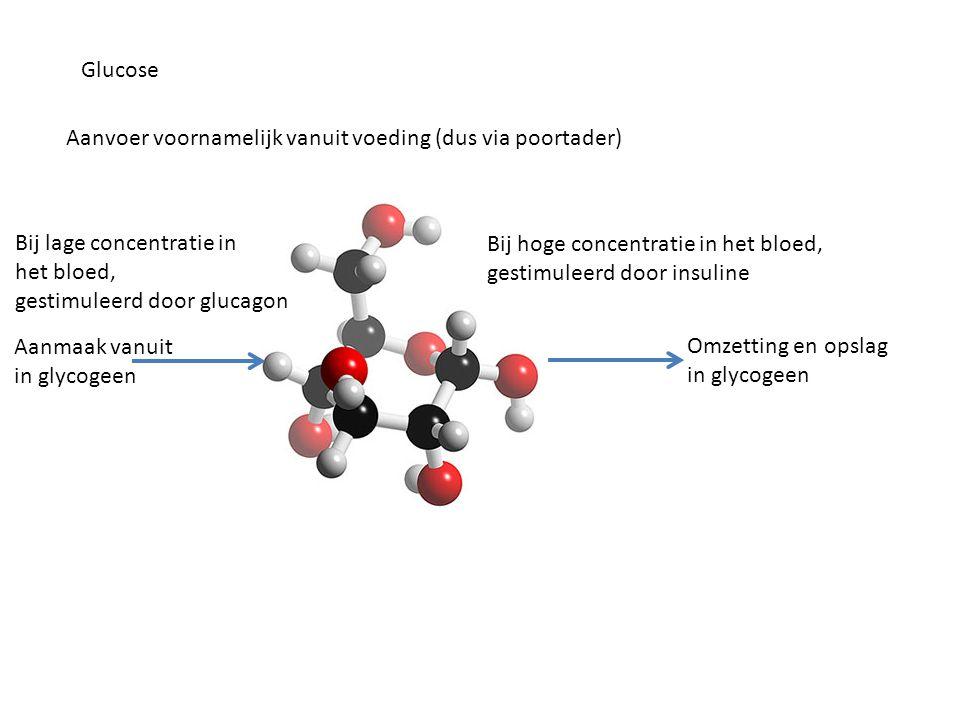 Glucose Aanvoer voornamelijk vanuit voeding (dus via poortader) Bij lage concentratie in. het bloed,