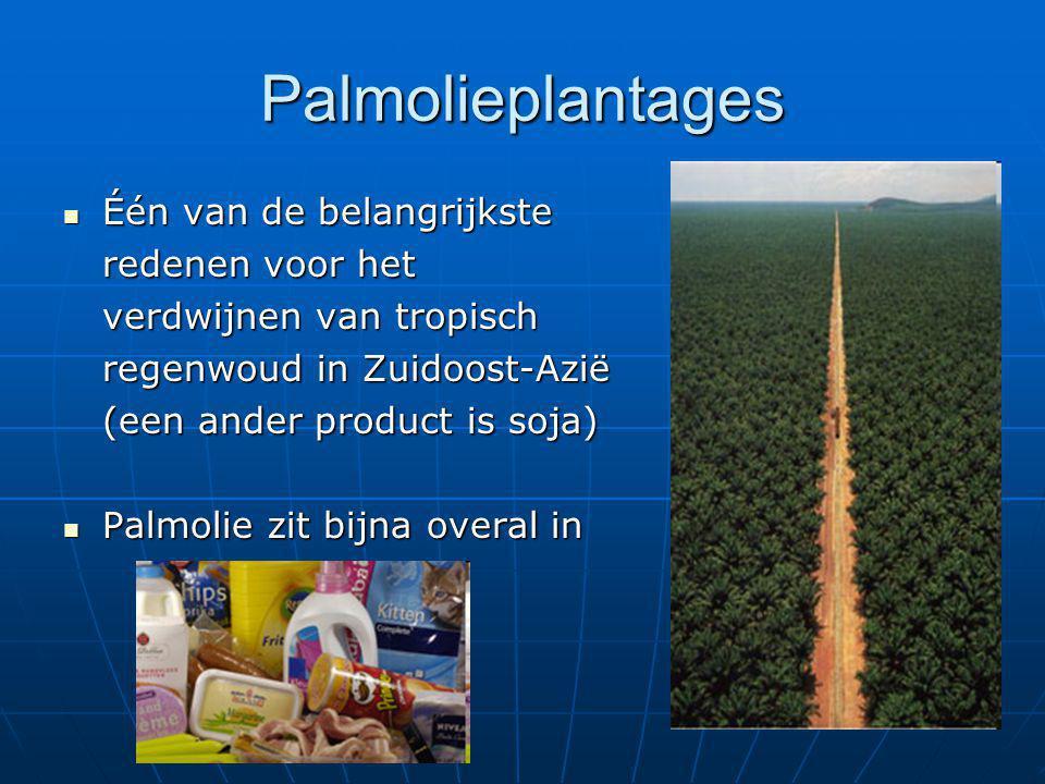 Palmolieplantages Één van de belangrijkste redenen voor het