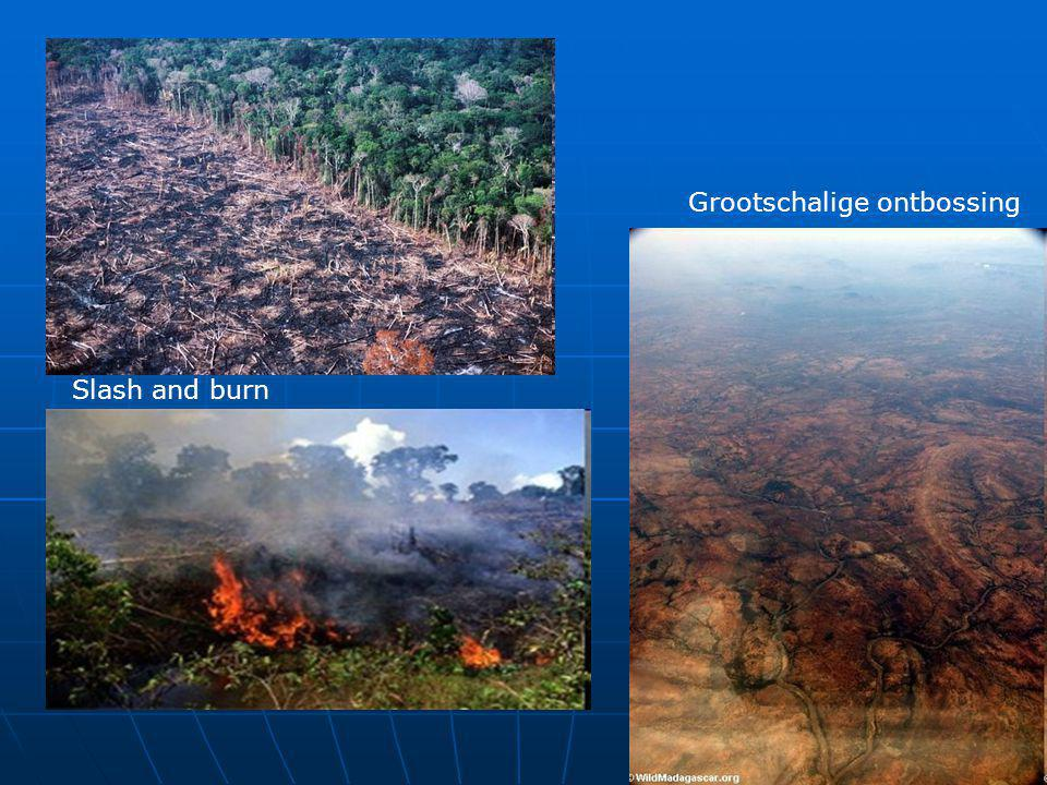 Grootschalige ontbossing