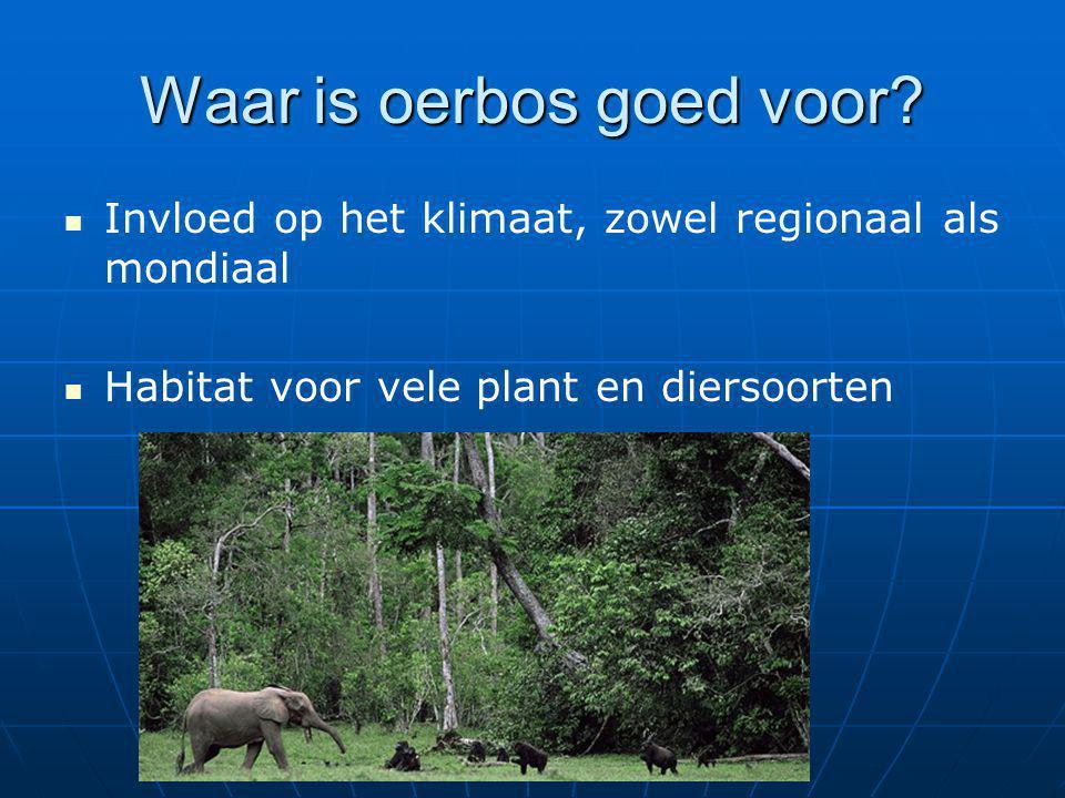 Waar is oerbos goed voor
