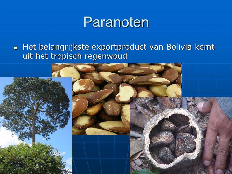 Paranoten Het belangrijkste exportproduct van Bolivia komt uit het tropisch regenwoud