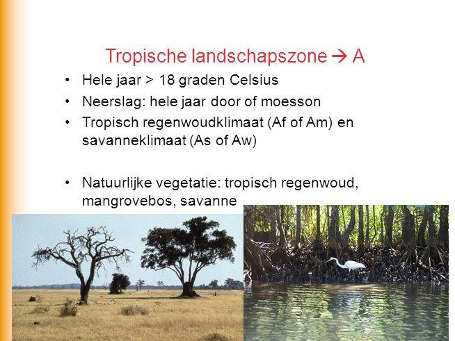 Tropische landschapszone  A