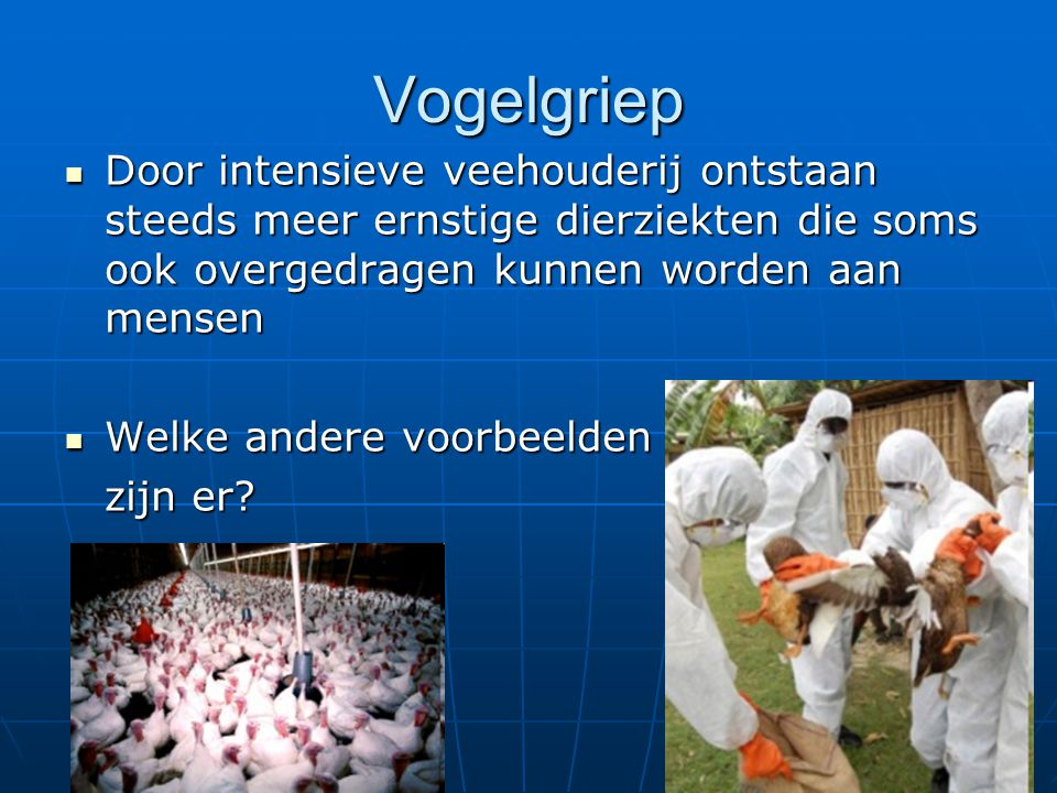 Vogelgriep Door intensieve veehouderij ontstaan steeds meer ernstige dierziekten die soms ook overgedragen kunnen worden aan mensen.