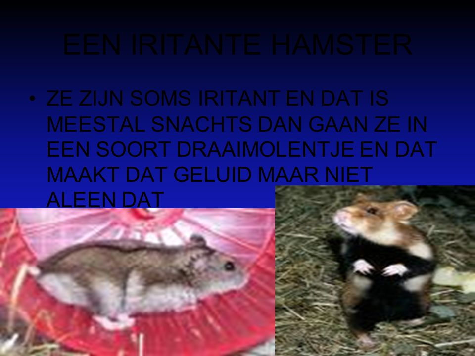 EEN IRITANTE HAMSTER