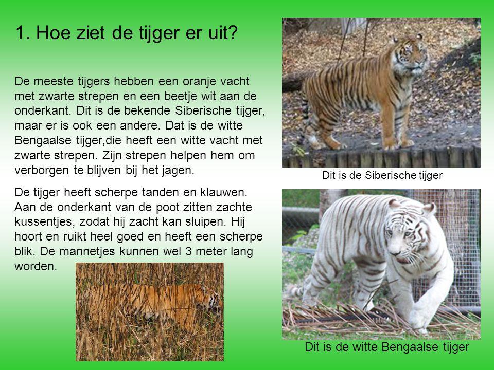 1. Hoe ziet de tijger er uit